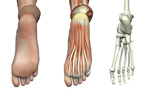Podiatric Anatomy