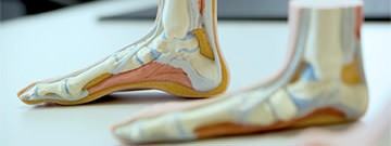 Introduction to Podiatric Biomechanics